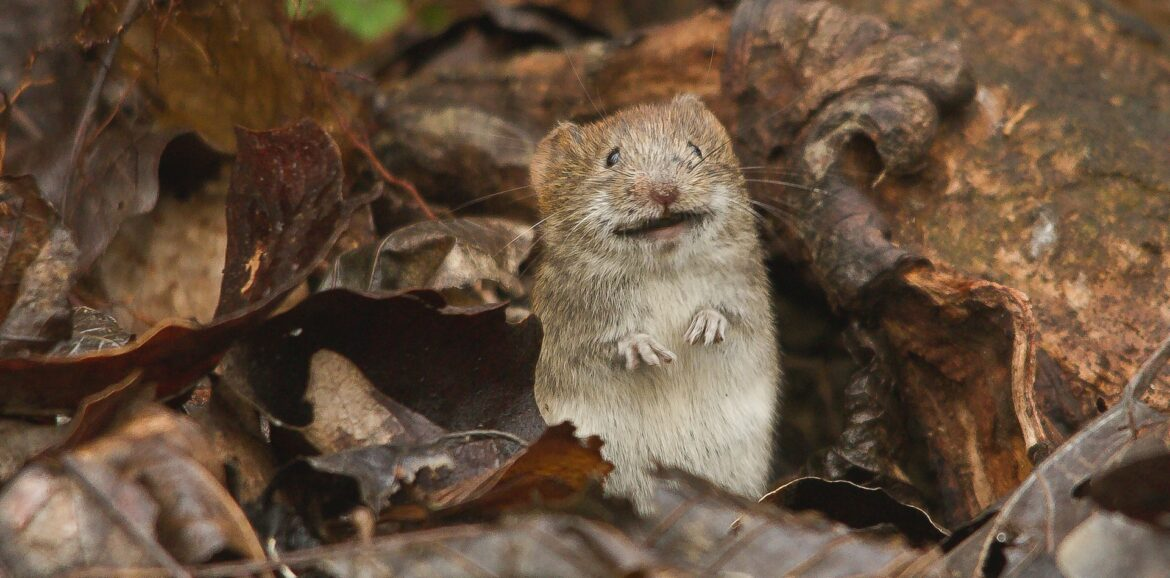 A picture of a frightened rodent